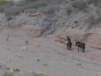 gaucho-patagonia